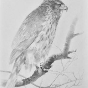 original graphite sketch by Barb McGuey