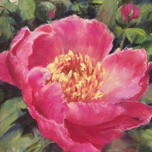 "PEONY by HELEN VAN POORTEN, Pastel, 12""x12"", unframed, $220"