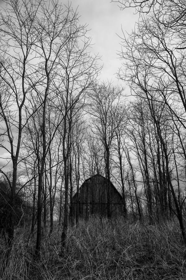 Black and White Photograph of an old Barn standing in a copse of trees