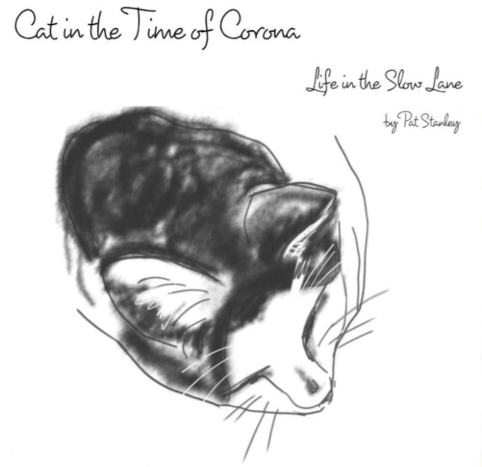 pencil sketch of black and white cat, curled up sleeping