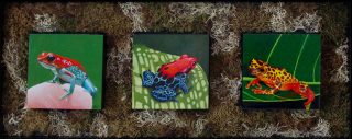 "THE SOPRANOS by Bob ""Omar"" Tunnoch, Mixed Media, poison arrow frog, red eyed frog, harlequin frog, 29"" x 12"", $500"