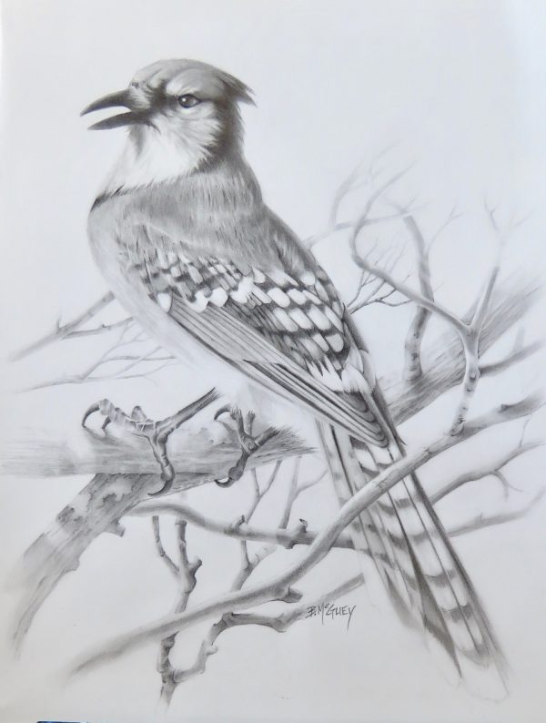 Graphite Sketch by Barb McGuey